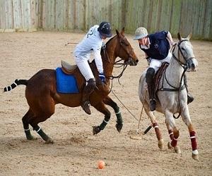 Equestrian Inc