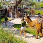 Lowry-Park-Zoo