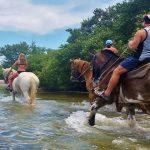 beach-horseback-rides-tampa-bay